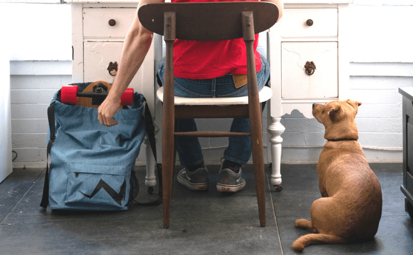 Eggboards skateboard backpack with straps laying next to desk with guy sitting and dog looking