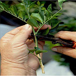 plant cutting photo
