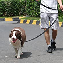 long lead,long dog lead,dog lead,dog leash long,dog tie out,extra long leash,long leash for backyard