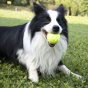 dog toys for medium dogs