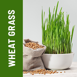 detoxify capsules, wheat grass, wheat grass extract capsules, tablets