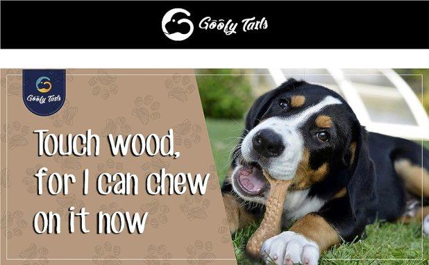 chew dog bone
