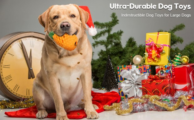 durable dog toy