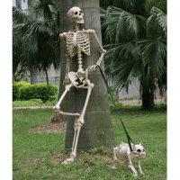Unique Halloween Decorations: Posable Halloween Skeleton