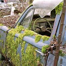 fotografia urbex; automobile abbandonata; muschio;