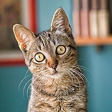 gatto, mondo naturale, cattura, fotografia, fotografia digitale, corso di fotografia, fotocamera