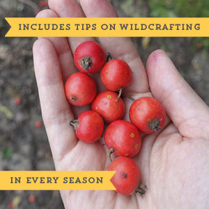 Medicinal Foraging Guides tips in season plants