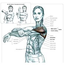 Stretching the Shoulder