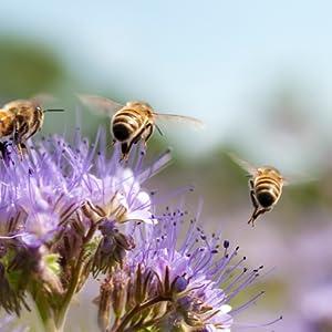 burts bees chapstick peppermint; burts bees lip balm mint; burts bees lip balm peppermint; burt's