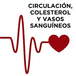 circulación colesterol triglicéridos vasos sanguíneos sistema circulatorio corazón hivital foods