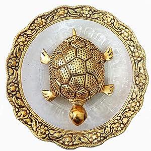 Tortoise on Glass Plate