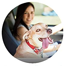 dog travel pad