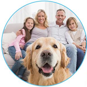reusable dog pad