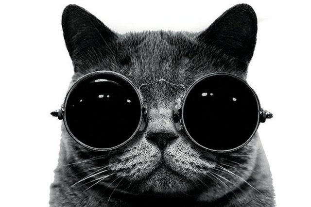 Ludzie zawsze dzielili się na zwolenników i przeciwników kotów.