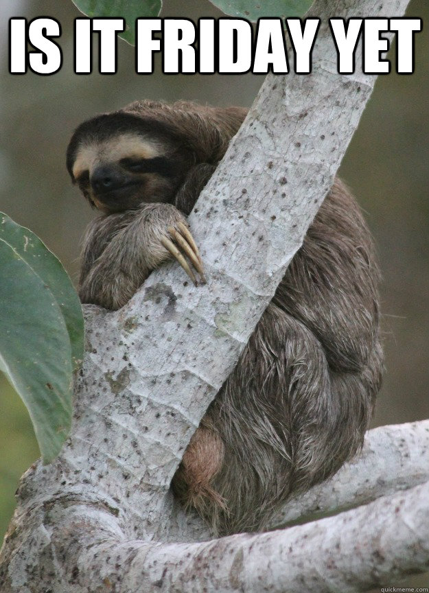 Is It Friday Yet Meme : friday, Friday, Sloth, Quickmeme