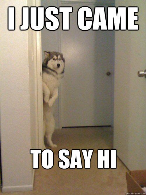 Funny Memes To Say Hello : funny, memes, hello, Awkward, Husky, Quickmeme