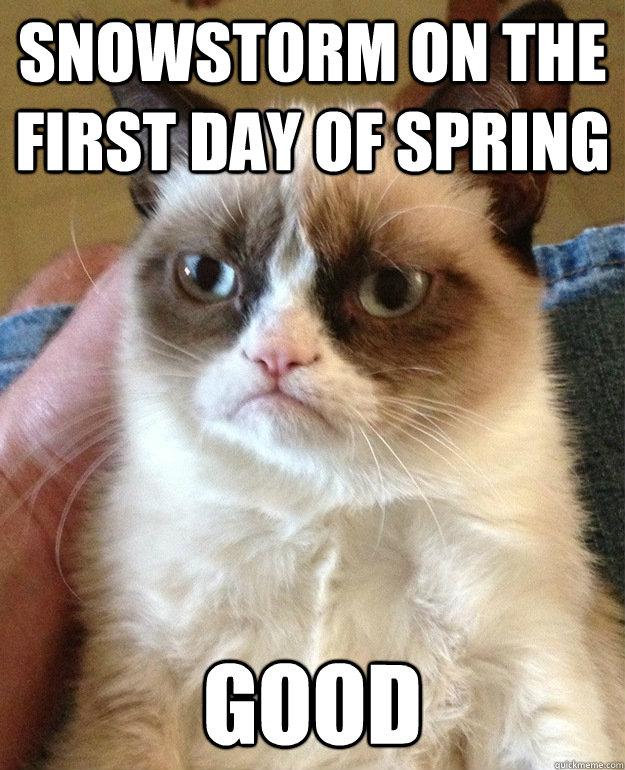 First Day Of Spring Funny Pics : first, spring, funny, Snowstorm, First, Spring, Grumpycat, Quickmeme