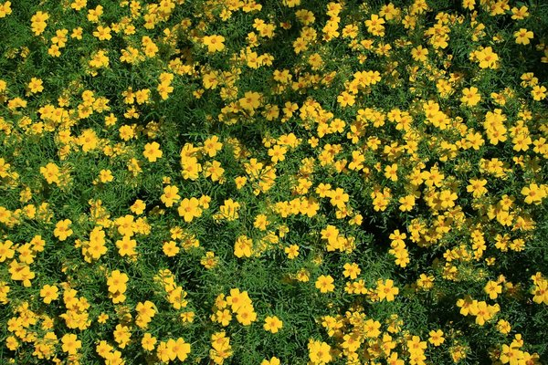 garden plants with yellow flowers