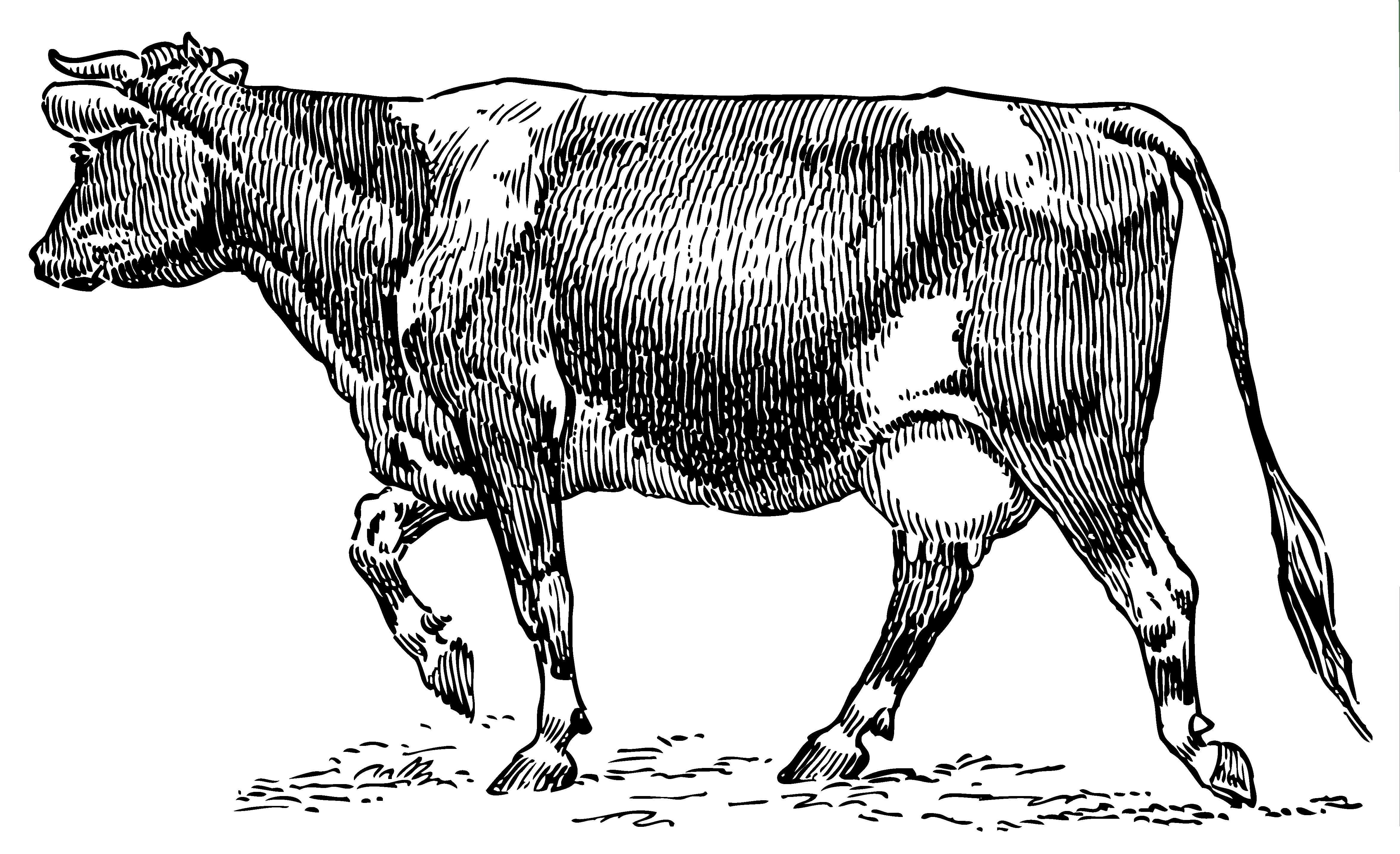 Dairy Cow Vintage 1 Clip Art