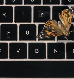 apple s faulty macbook butterfly keyboard explained with real butterflies [ 1920 x 1080 Pixel ]