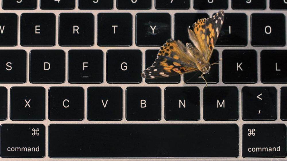 medium resolution of apple s faulty macbook butterfly keyboard explained with real butterflies