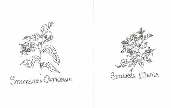 Apothecary Herb Pen Sketches 2003 on Behance