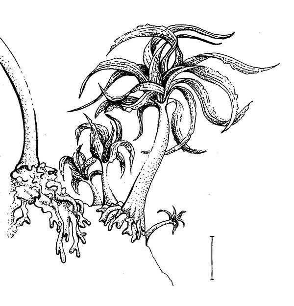 Biological Illustrations on Behance