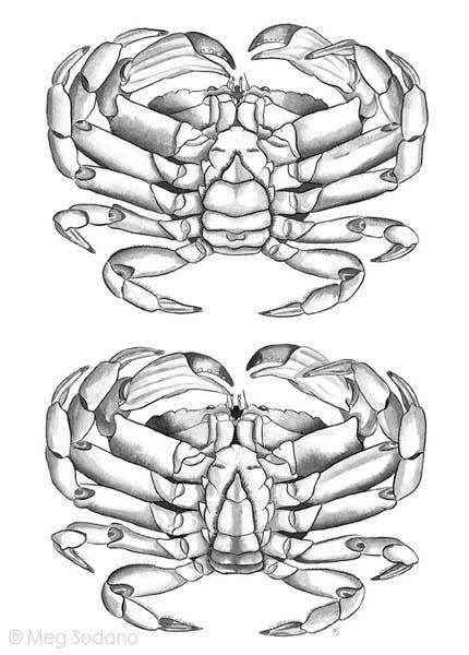 Marine Invertebrates on RISD Portfolios