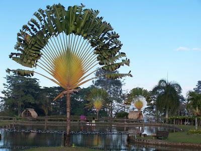 Árbol del viajero de Madagascar