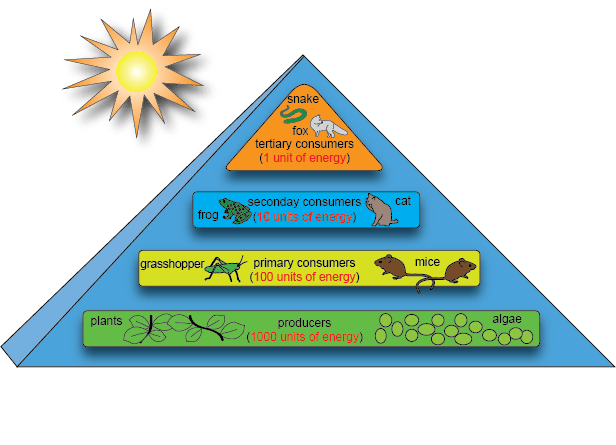 deciduous forest food chain diagram mitsubishi pajero wiring diagrams flujo de energía, niveles tróficos - paperblog