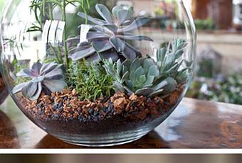 Decorar con cactus y jarrones  Paperblog