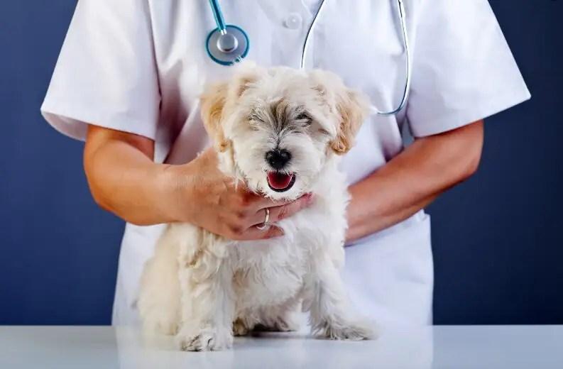 L'Université du Québec à Rimouski formera des vétérinaires