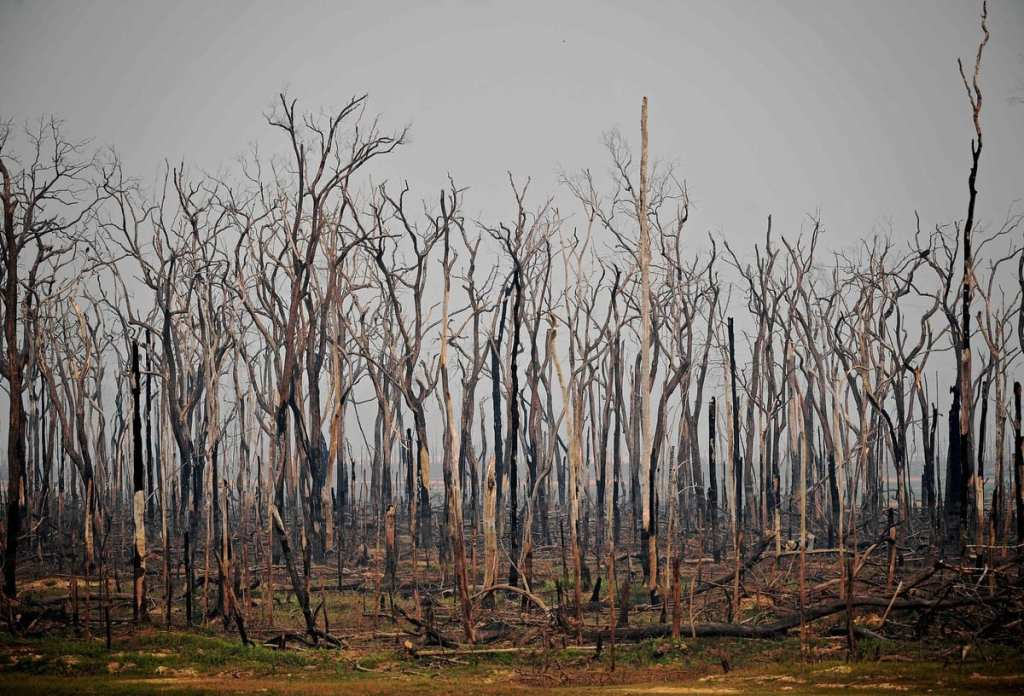 Avec la pandémie, une Amazonie plus fragilisée que jamais