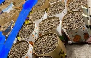 Ils font pousser 100 000 livres de patates pour une banque alimentaire d'Edmonton