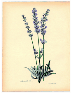 Immagini vintage da stampare  Paperblog