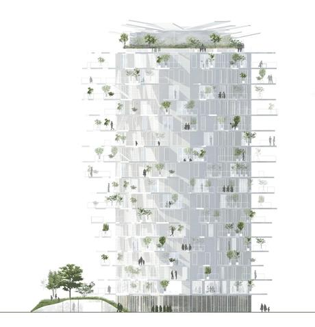 Arbre Blanc a Montpellier  Paperblog
