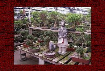 Bonsai prezzi  Paperblog