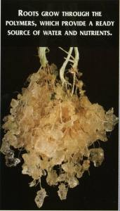 AgSAP Crystals on root of plant