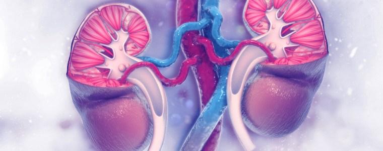 World Kidney Cancer Day
