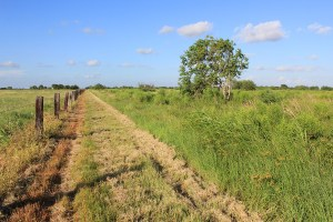41 Acres For Sale – Victoria, Texas