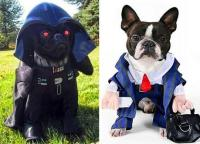 The CUTEST Halloween COSTUMES for DOGS 2014! - Paperblog