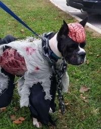 Top 10 Scariest Halloween Costumes for Dogs You Will Ever ...