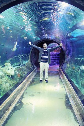 SEA LIFE Grapevine Aquarium  Paperblog