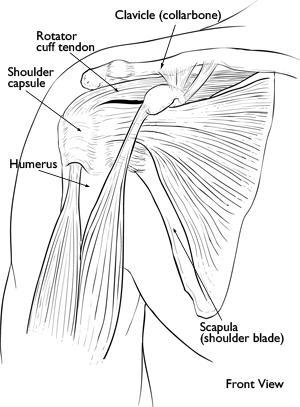 Frozen Shoulder: Causes and Treatment  Paperblog