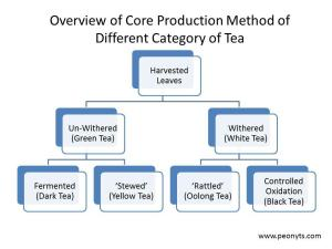 The Health Benefits of Different Types of Teas Part I  Paperblog