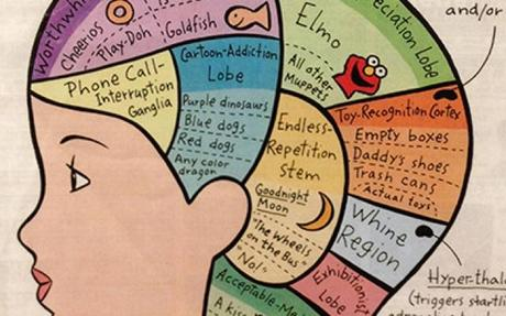 The 2 Year Old Brain, the brain creates many more of them than it needs: at age two or three, - Paperblog