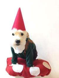 Dog Gnome Costume - Paperblog
