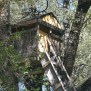 Three Haiku Wednesday Tree House Mike S Look At Life