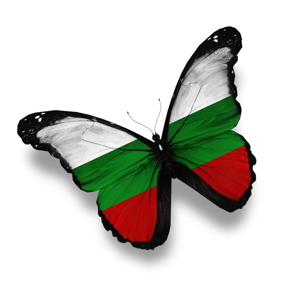 12665560 - bulgarian flag butterfly, isolated on white