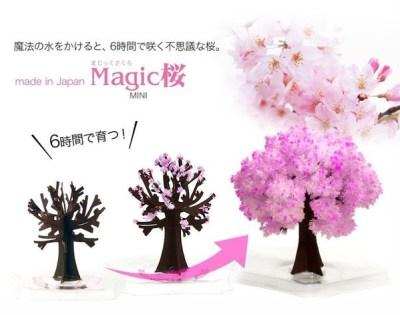「マジック桜」魔法の水をあげると桜が満開!インドア花見にも最適…
